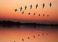 Птицы оседлые, перелетные и кочующие в осенний период