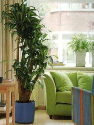 Подбираем комнатные растения для компьютерной зоны и гостинной